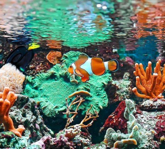 Reed mariculture aquarium