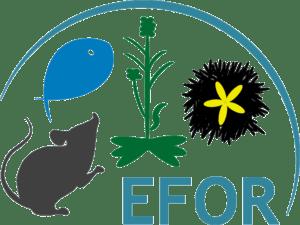 logo EFOR