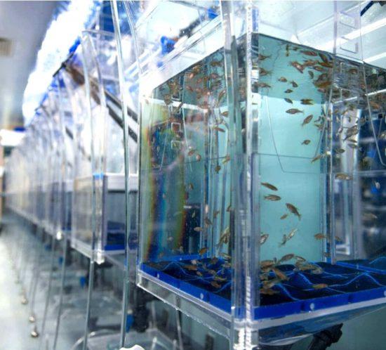 Laboratoire de recherche poisson zèbre