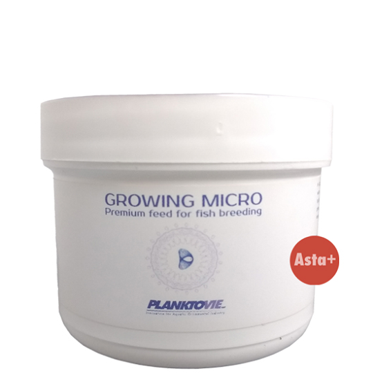 Growing Micro asta +