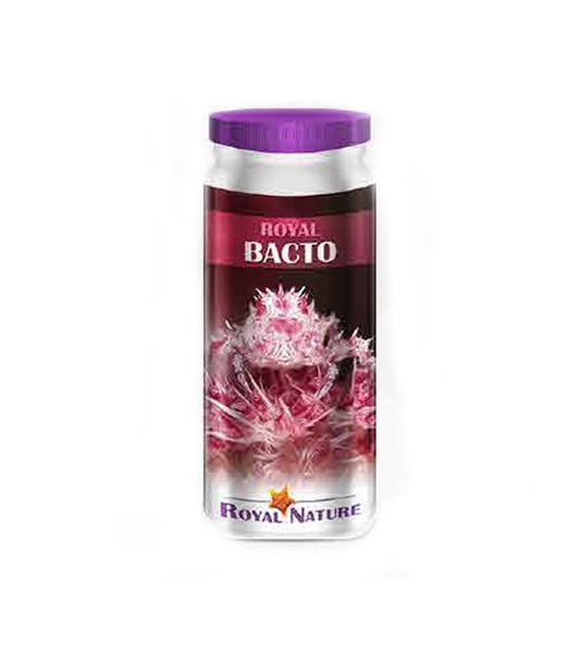 Flore bactérienne