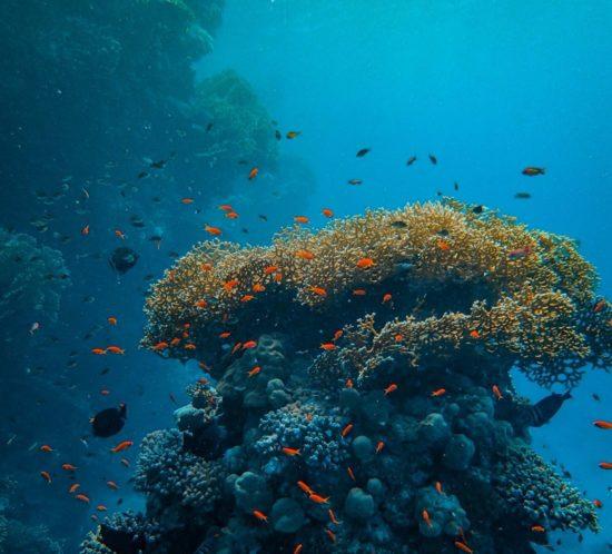 Fond marin poisson