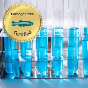 Pathogen free