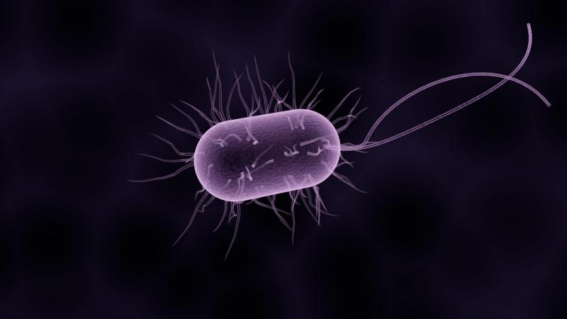 Cyanobacteria macro image