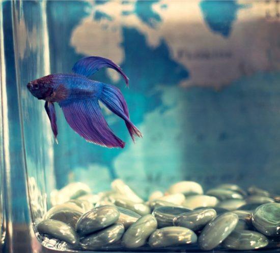 Stérilisation d'un bac après quarantaine de poisson