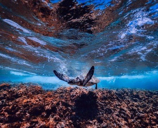 aires marines protégée